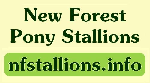 nfstallions.info on facebook